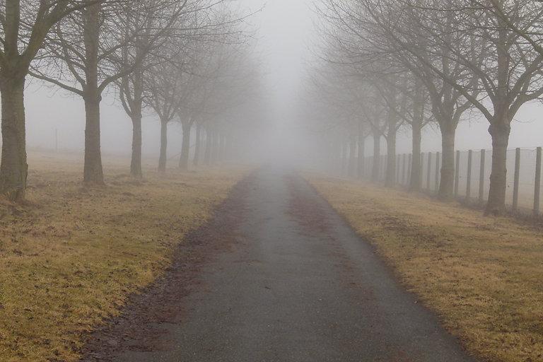 01-nebelmorgen.jpg